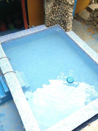 La Casa de Manito : View of the pool