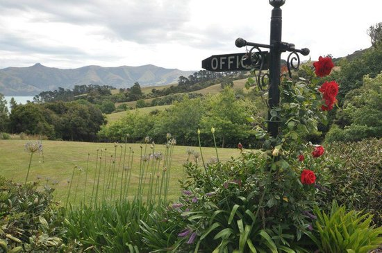 Akaroa Cottages - Heritage Collection: Loved the flowers