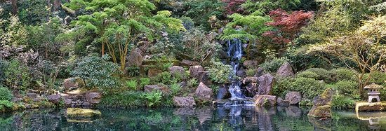 Panormaic view of the waterfalls and koi ponds in the Portland Japanese Gardens