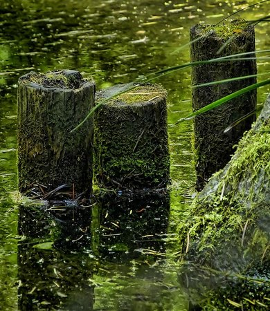 A reflection pond in the Portland Japanese Gardens