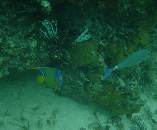 Hotel Playa Coco: A small sample of the assorted fish that can be seen a few hundred meters from the resort beach.