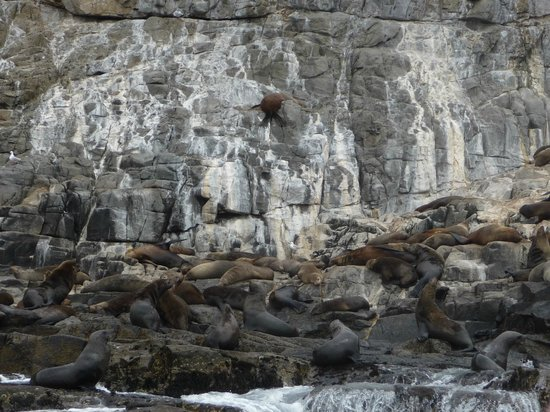 Bruny Island Cruises : I hope you can see the seals..