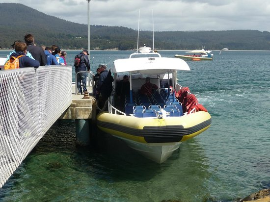 Bruny Island Cruises : They take out 3 or 4 of these heavy duty boats