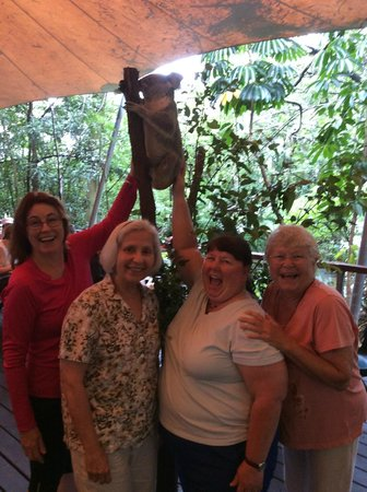 Cairns Tropical Zoo : A Koala joins us for breakfast