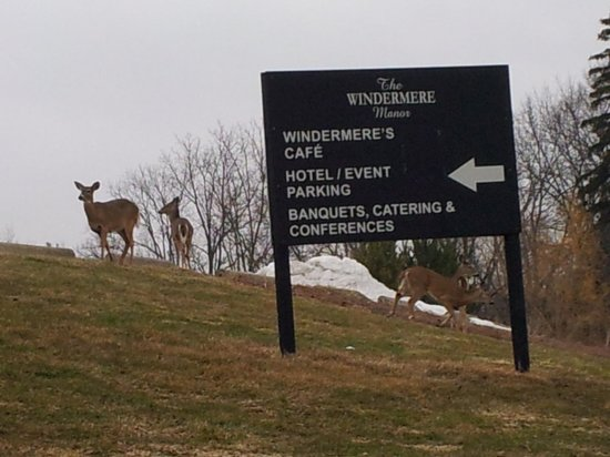 Windermere Manor Hotel & Conference Centre : Deer, again!