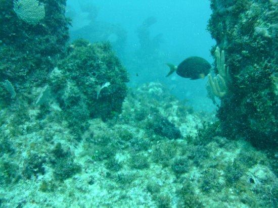 Pelicano Water Sports: Lots of fish