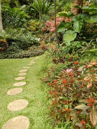 Hunte's Gardens : Hunte's Garderns