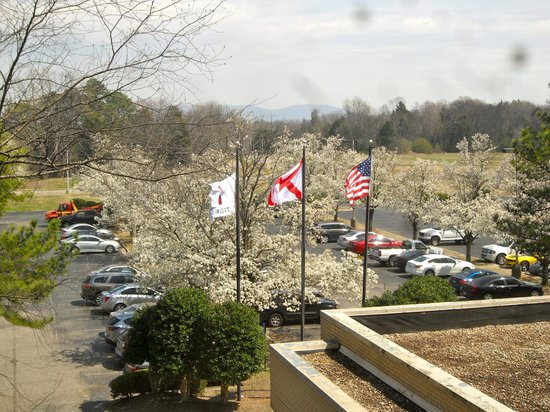 Huntsville Marriott at the Space & Rocket Center: View of trees in bloom from room window