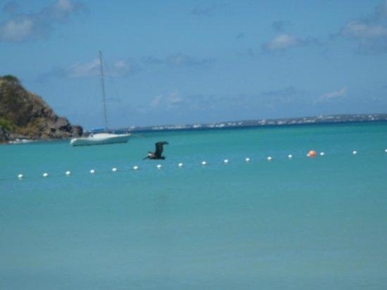 Anse Marcel Beach