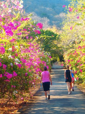 Rancho Armadillo Estate: Flower-lined Laneway to Rancho Armadillo