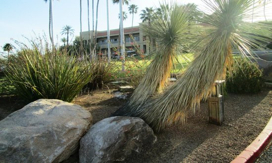 Hilton Tucson El Conquistador Golf & Tennis Resort : Front entrance from the edge of the parking lot