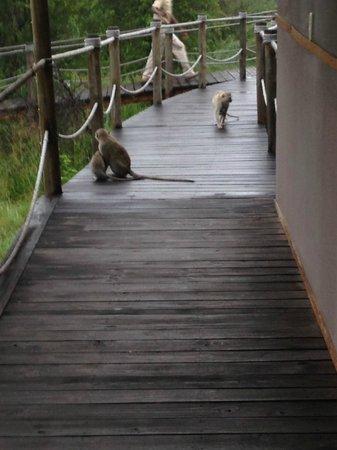 Wilderness Safaris Toka Leya Camp: A visitor