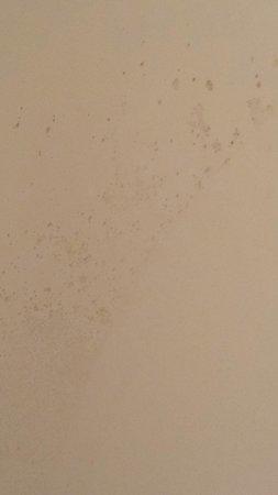 Tarpon Inn : Mildew/mold on bathroom wall