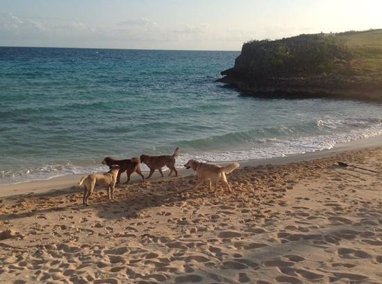 The Cove Eleuthera: the owners dog are a highlighy