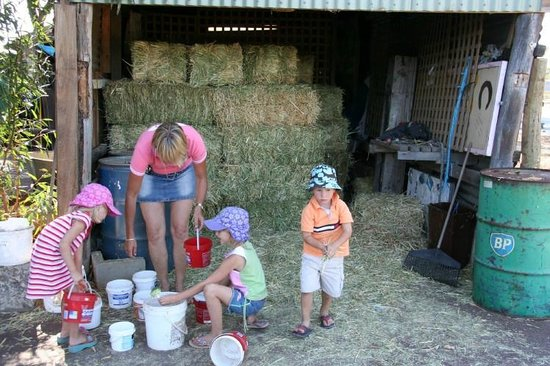 Settlers Rest Farmstay: Feeding time with the children