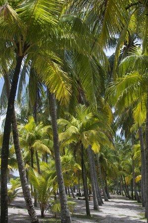 Hotel Guanamar: La Playa