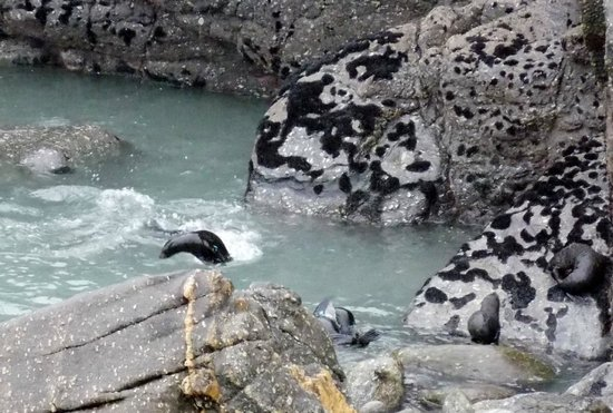 Cape Foulwind Walkway: Foulwind Seal Colony