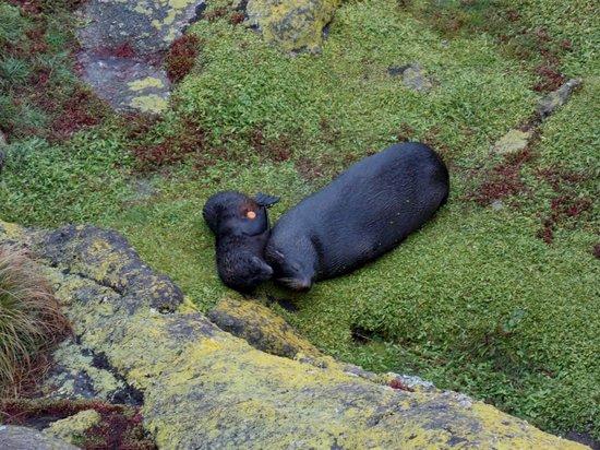 Cape Foulwind Seal Colony : Foulwind Seal Colony