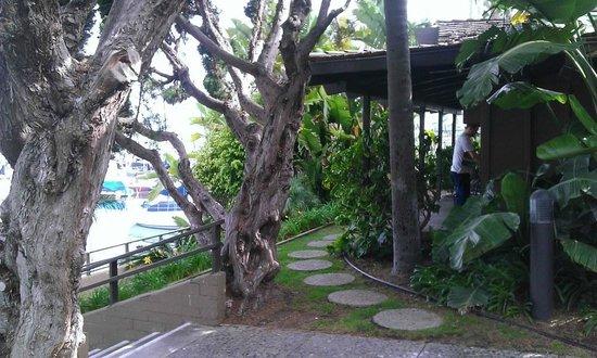 Best Western Plus Island Palms Hotel & Marina: View to room 169