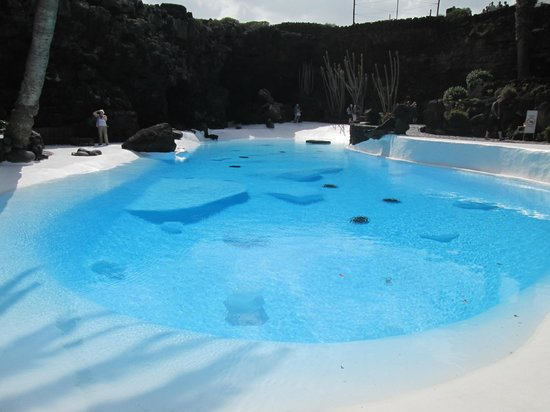Jameos Del Agua : Pool area