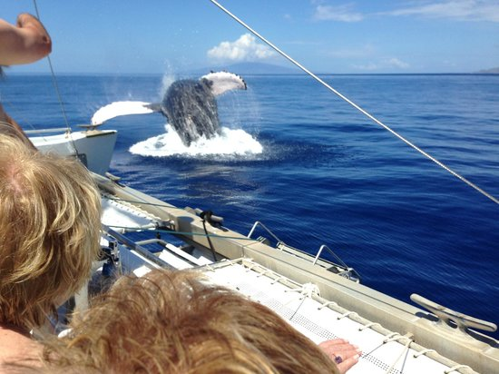 Four Winds II: The Crew Never Saw Such a Close Whale Breach