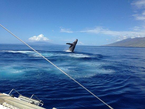 Four Winds II: A Whale Breach