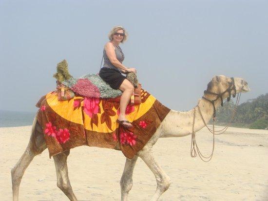 Sreekrishna Ayurveda Centre: Camels on the beach