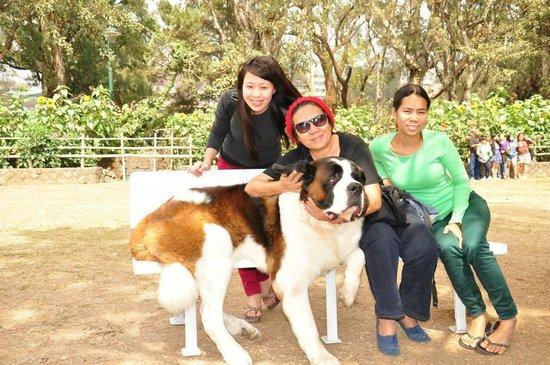Burnham Park: Posing with a large dog
