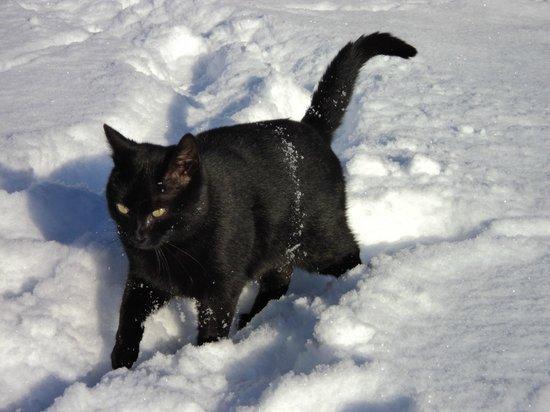Kinderferienhof Bergblick: unsere Katze Jerry