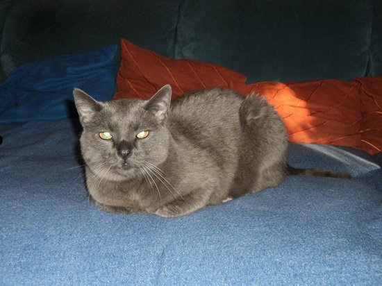 Lengenwang, Γερμανία: unsere Katze Cherry
