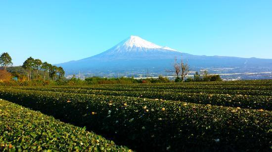 Guest House Tokiwa : 富士山と茶畑宿から綺麗な富士山が見れます。