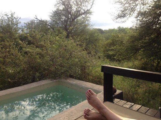 Ezulwini Game Lodges : Plunge pool