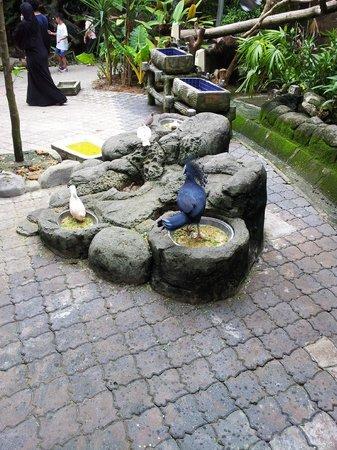 Sunway Lagoon Theme Park : Exotic birds