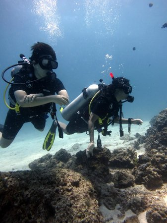 Indepth Dive College: FUN PADI Open Water Divers