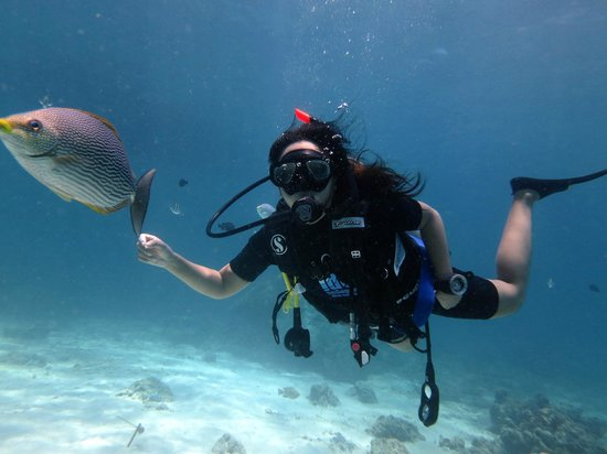 Indepth Dive College: PADI Open Water Course 3