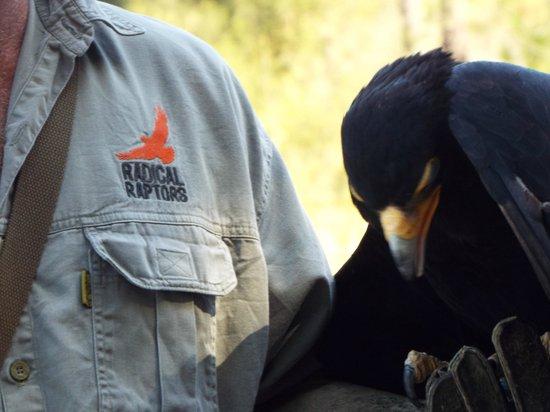 Radical Raptors: snactuary logo