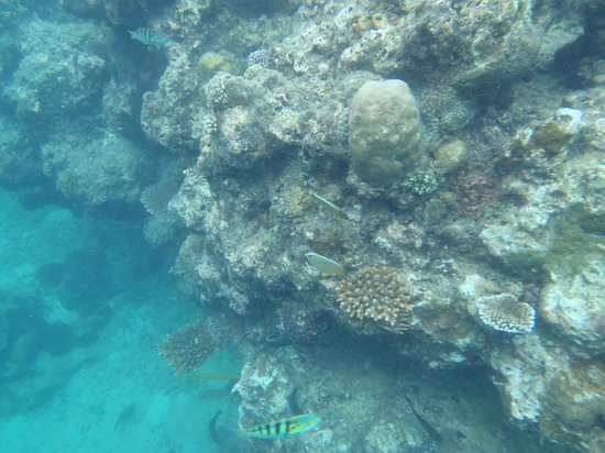 Hideaway Island Resort & Marine Sanctuary: Coral