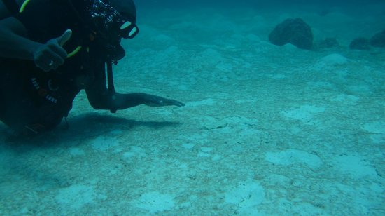 Infinity Ocean Diving - Private Diving: le pieds ;)