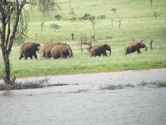Lewa Wildlife Conservancy: Elephants by the water hole