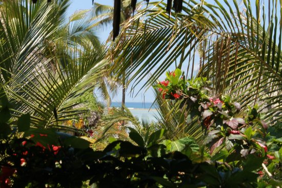 Green and Blue Ocean Lodge: Vue depuis terrasse bungalow jardin