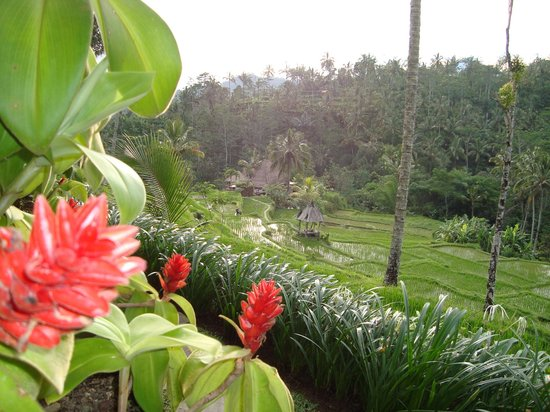 Dara Ayu Villas & Spa: ricefield views from hotel