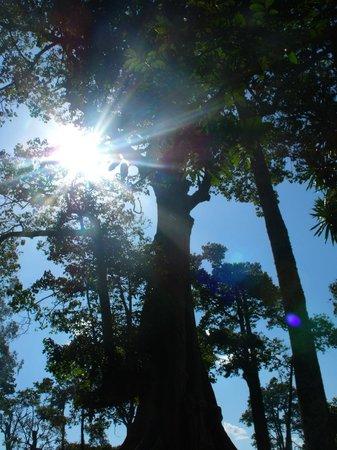 Uganda Safari Day Tours : L'albero sacro a tutti (islamici/ cattolici/ anglicani ecc..)