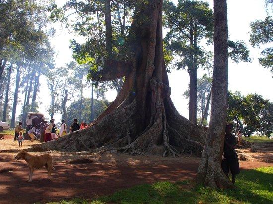 Uganda Safari Day Tours: L'altare della fertilità gemellare