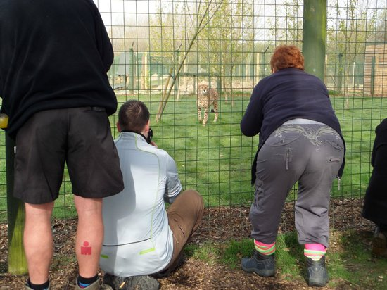 The Big Cat Sanctuary: The experience allows you to get right up to the fence & pop your lens through to get the best p