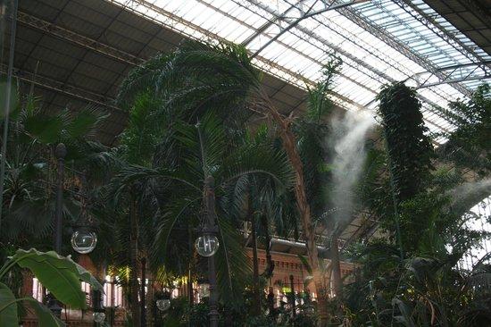 Estación de Atocha: Especie de Estufa