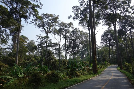 Chiang Dao Nest: road to town