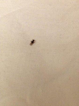Hampton Inn Daytona Shores - Oceanfront: one 3 bugs founf under my comforter moving around