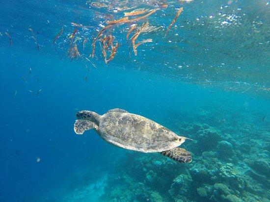 Fihalhohi Island Resort : One of our swimming buddies