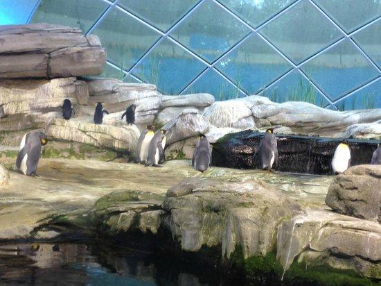 Zoologischer Garten (Berlin Zoo): Пингвинарий