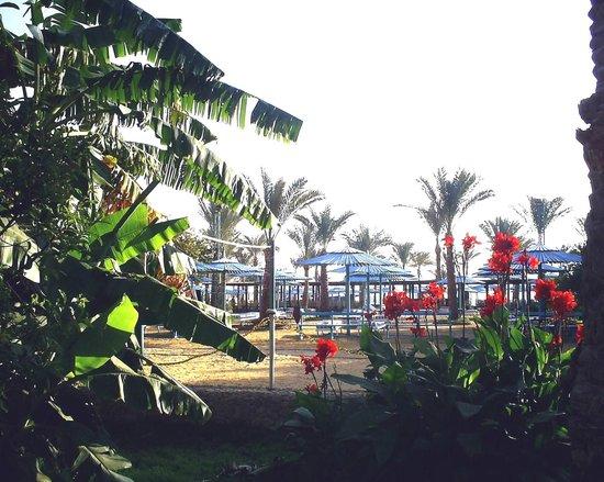 Le Pacha Resort: Пляж